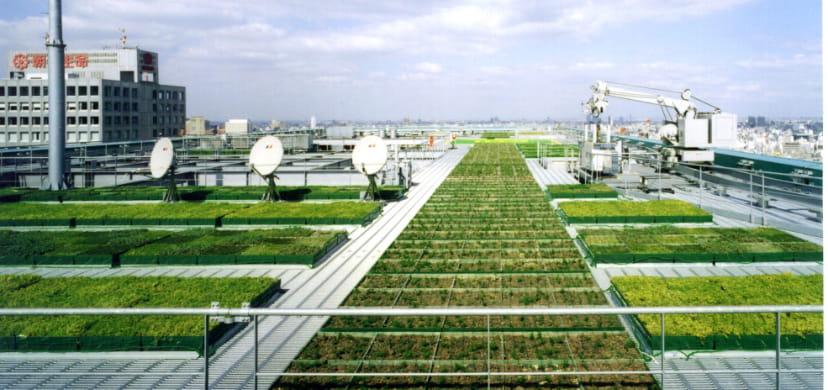Societal and environmental sustainability