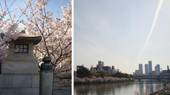 4月1日、大阪本社周辺の桜。高麗橋(左)と天満橋(右)